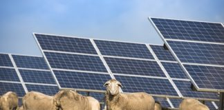 Wirsol acquires two subsidiary-free solar parks in the UK