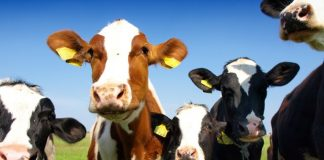 ABP Food Group runs UK beef and lamb sites on green power